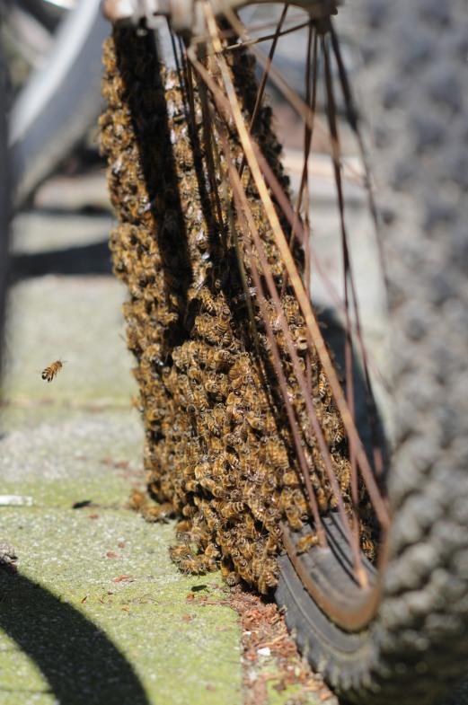 bijen aan het wiel