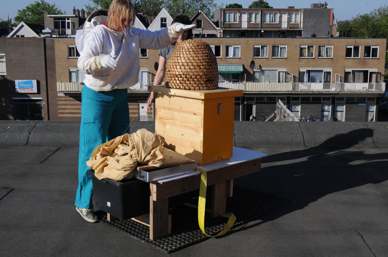 carien klopt bijen uit kip